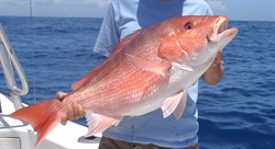 Scientific Team Selected for Independent Abundance Estimate of Red Snapper in the Gulf of Mexico