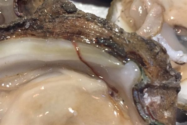 Worms on Oysters Harvested from Reefs are a Natural Occurrence