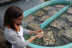 Ocean Acidification Research Fellowship available to students in Mid-Atlantic
