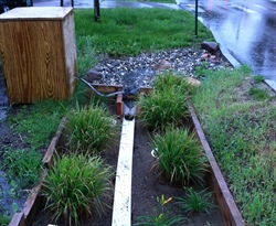 Urban Stormwater Management Research and Outreach
