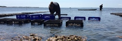 Woods Hole Sea Grant Facilitates Development of Aquaculture Siting Tool in Massachusetts