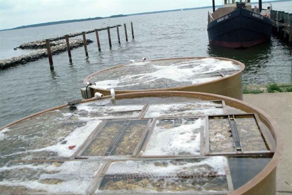 Remote Setting Training Program to Grow Oysters