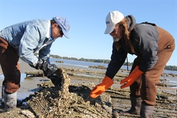 Growing Better Bivalves: Science, local knowledge enhance N.C. business