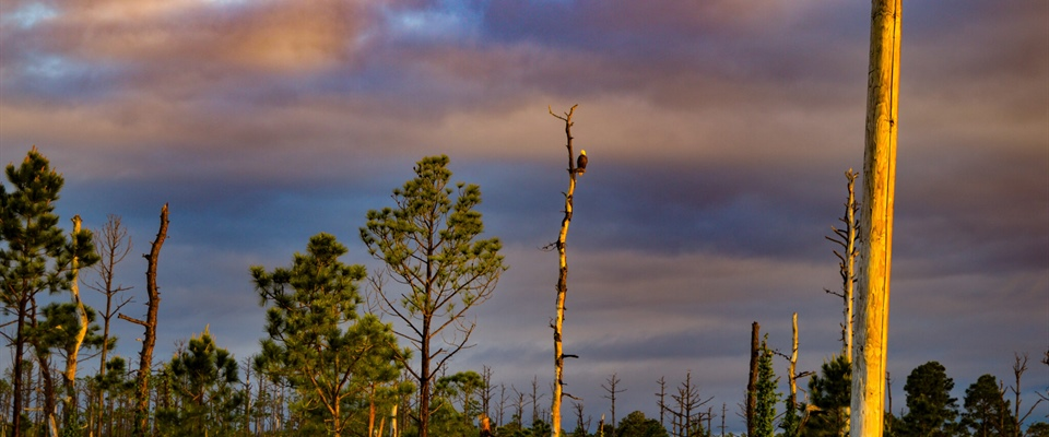 North Carolina Sea Grant Study Finds Spreading Ghost Forests on NC Coast may Contribute to Climate Change