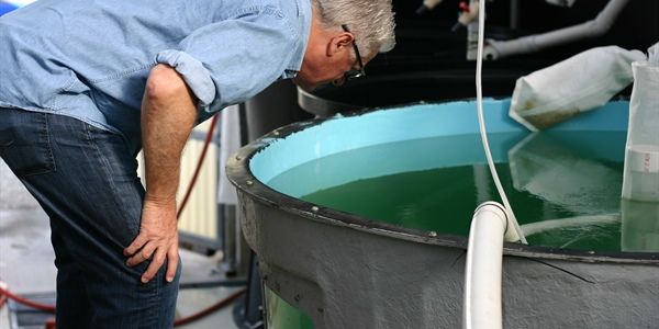 Sea Grant announces $9.3 million for aquaculture research and industry support