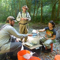 California Sea Grant research leads to water reallocation to improve juvenile salmon survival in flow-impaired stream