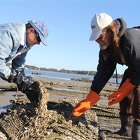 Scientist, fisherman partner on oyster business, ecological restoration after collaborating on NC Sea Grant projects