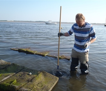 Woods Hole Sea Grant Research Finds Added Benefit of Shellfish Aquaculture; Nitrogen Removal in Local Waters