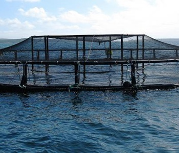 New Report Identifies Next Steps for Offshore Aquaculture in Southern California