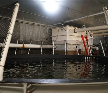 Wisconsin Sea Grant Helps Launch Innovative Salmon-Raising Business