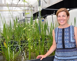 LSU Research Team Examines Blue Carbon Capacity of Louisiana Marshes with Implications for Restoration