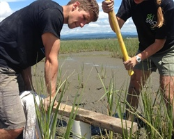 Washington Sea Grant-supported Research Quantifies the Climate Benefits of Coastal Wetland Restoration
