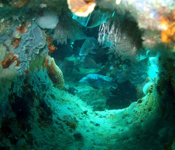Florida Sea Grant's Extension and Research Help Florida's Artificial Reef Program Generate $3.1 Billion in Economic Activity
